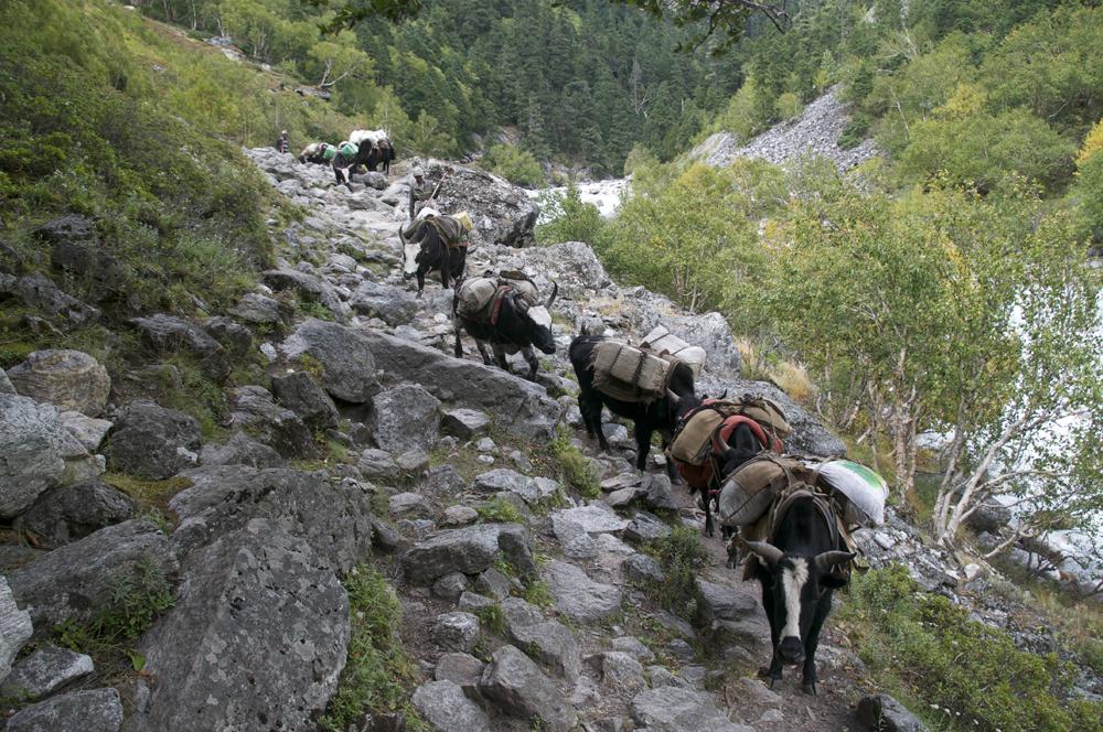 Nous croisons aussi beaucoup de troupeaux. C'est la démontagnure.