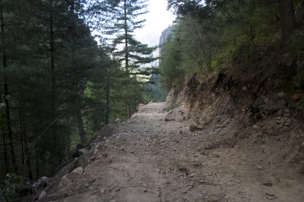 Unenouvelle piste dans la forêt… !